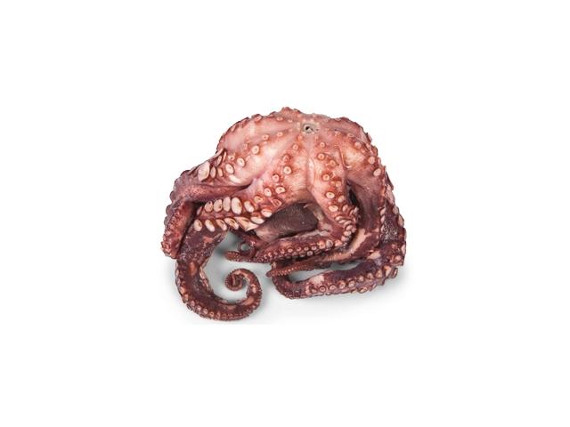 Chobotnice kuchaná cca 400g