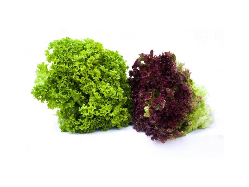 Salát Lollo biondo zelený (180g+) 1ks