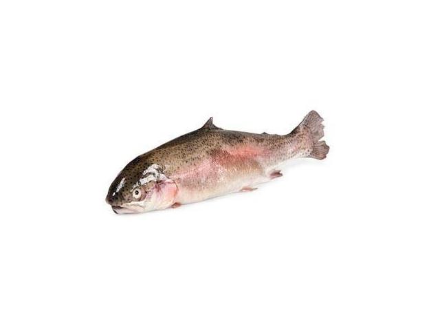 Pstruh lososovitý kuchaný cca 350g
