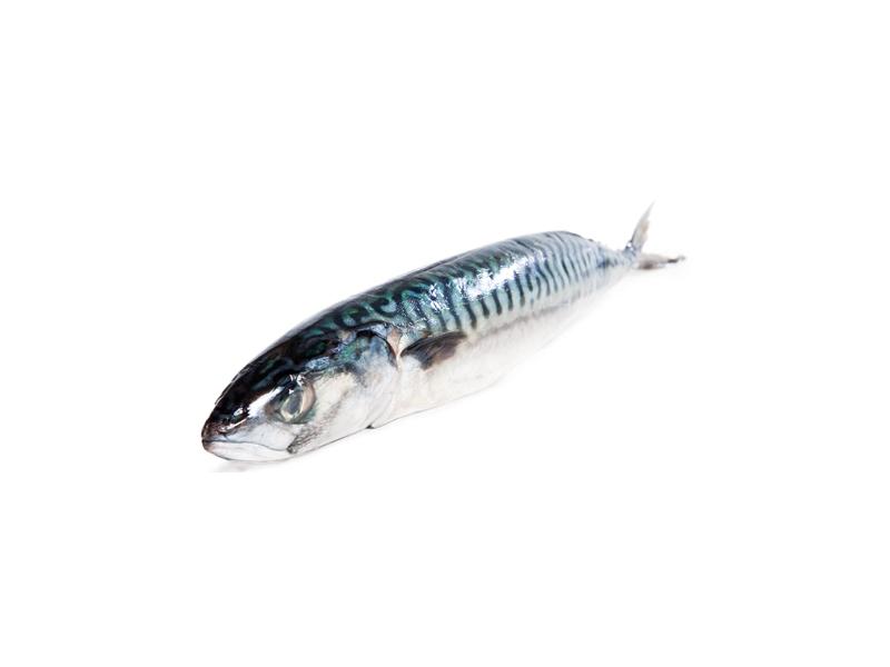 Makrela obecná nekuchaná celá cca 400g