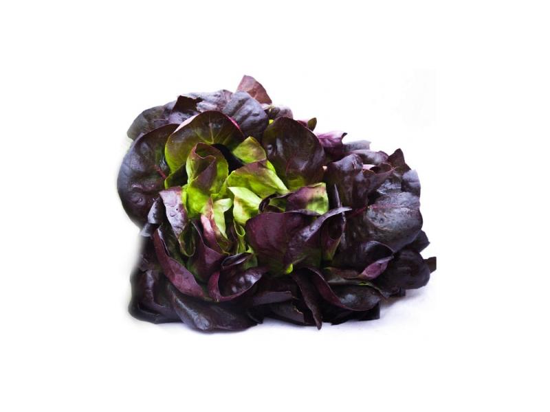 Salát Salanova červený čerstvý (150g+) 1ks
