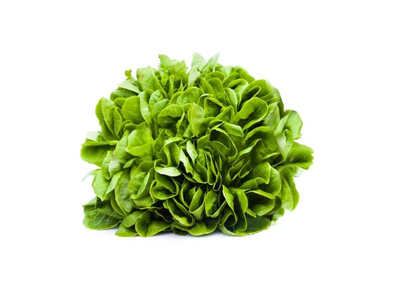 Salát Salanova zelený čerstvý (150g+) 1ks