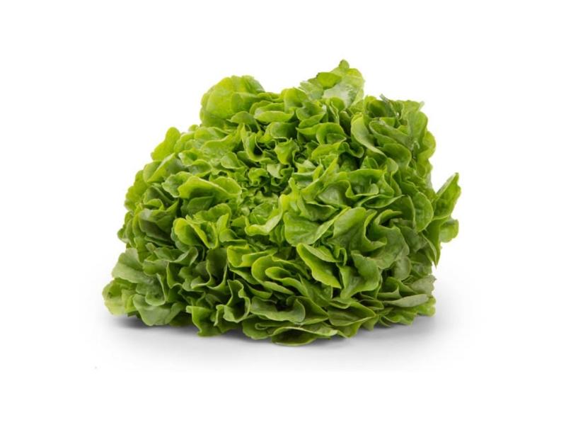 Český salát dubový zelený (180g+)