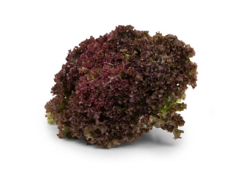 Český salát Lollo Rosso (180g+)